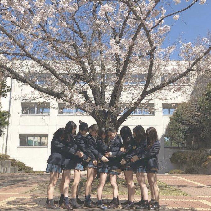 「桜を見る会 パンチラ」で検索